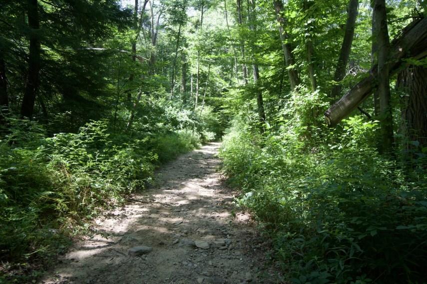 George Waldo State Park Trail
