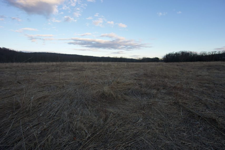 Higganum Meadows