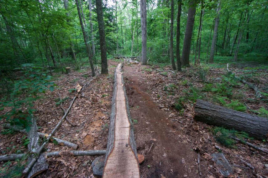 Mountain Bike Feature along Red Trail