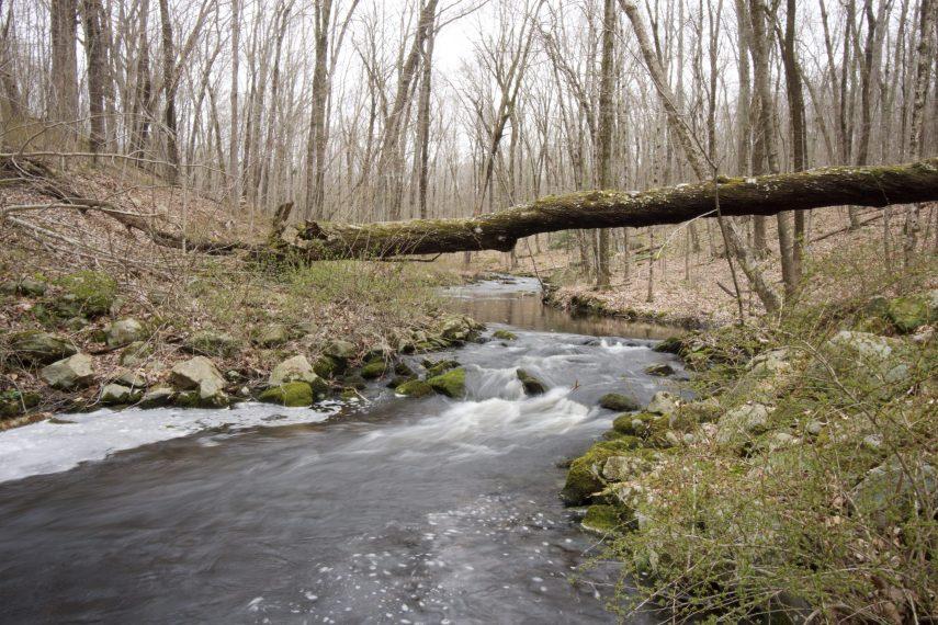 Friedman Forest Brook