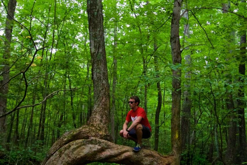 Friedman Forest Tree