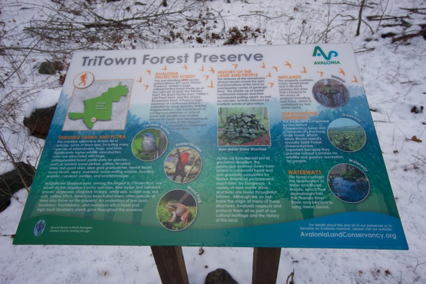 Tritown Forest Trailhead