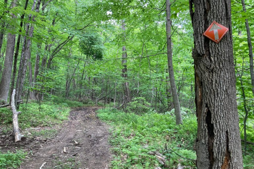 Bear Den Moto Trail