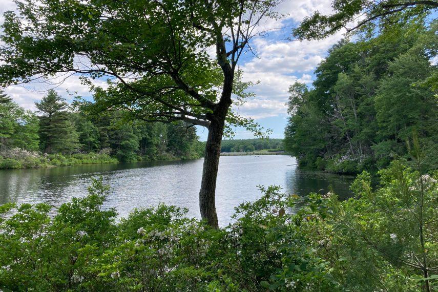Morey Pond