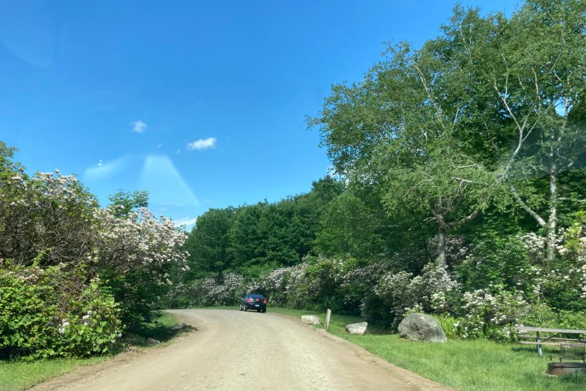 Mountain Laurel Sanctuary Road