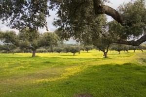 Dehesa, mediterranean photos