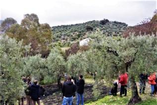 Olive oil tour vareo in white village Zahara de la Sierra Cadiz