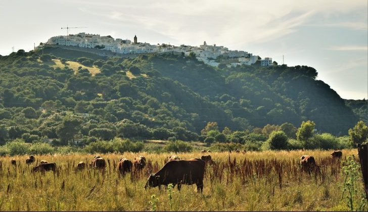 Go hiking Cadiz near viewpoint of Vejer de la Frontera with endemic retinto cow