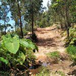 Mirador Marruecos parque natural del estrecho rutas guiadas senderismo Cádiz eucaliptus