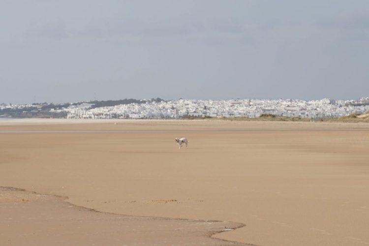 Explore la Tierra hikes in Conil de la frontera vista playa Cadiz