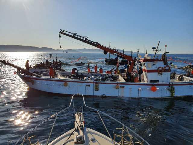 Almadraba bluefin tuna tour in Cadiz levanta