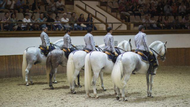horse school real escuela equestre what to do in Jerez de la Frontera Explore la Tierra