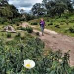 Jara en alcornocal en parque natural del Estrecho