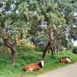 Ruta senderismo bosque mediterráneo en El estrecho natural park en Cadiz provincia desde Tarifa a Algeciras