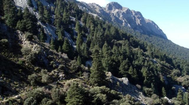 Pinsapar hike Wildside holidays Sierra Grazalema natural park