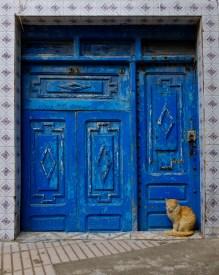Katzen prägen das Strassenbild von Essaouira