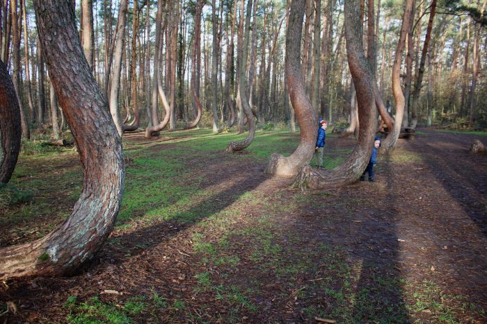 Boys play hide and seek in the Crooked Forest