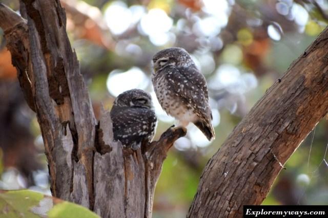 Birds at Gir forest