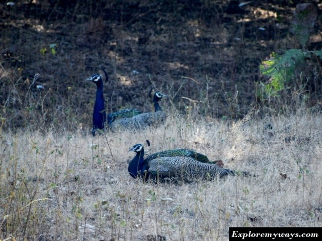 different birds at Gir forest