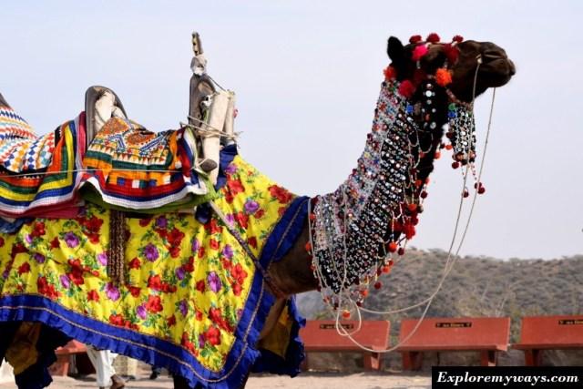 Camel ride at Kalo dungar hill