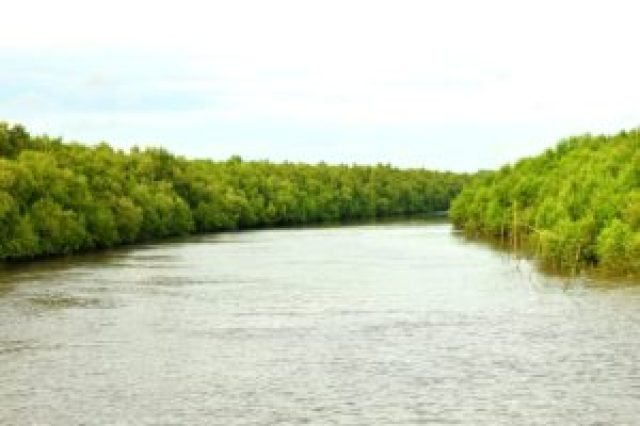 submerged sundarban forest