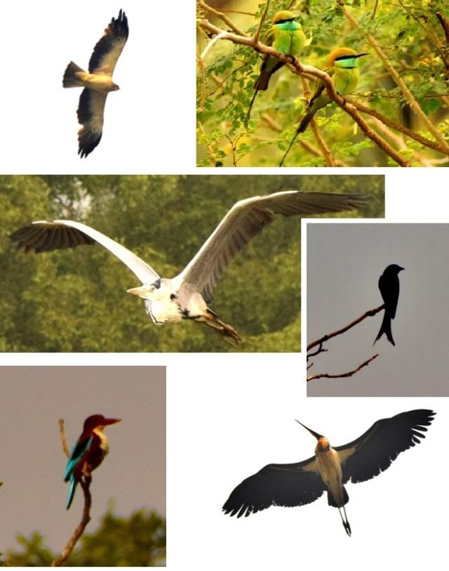 Birds in Bhitarkanika National Park