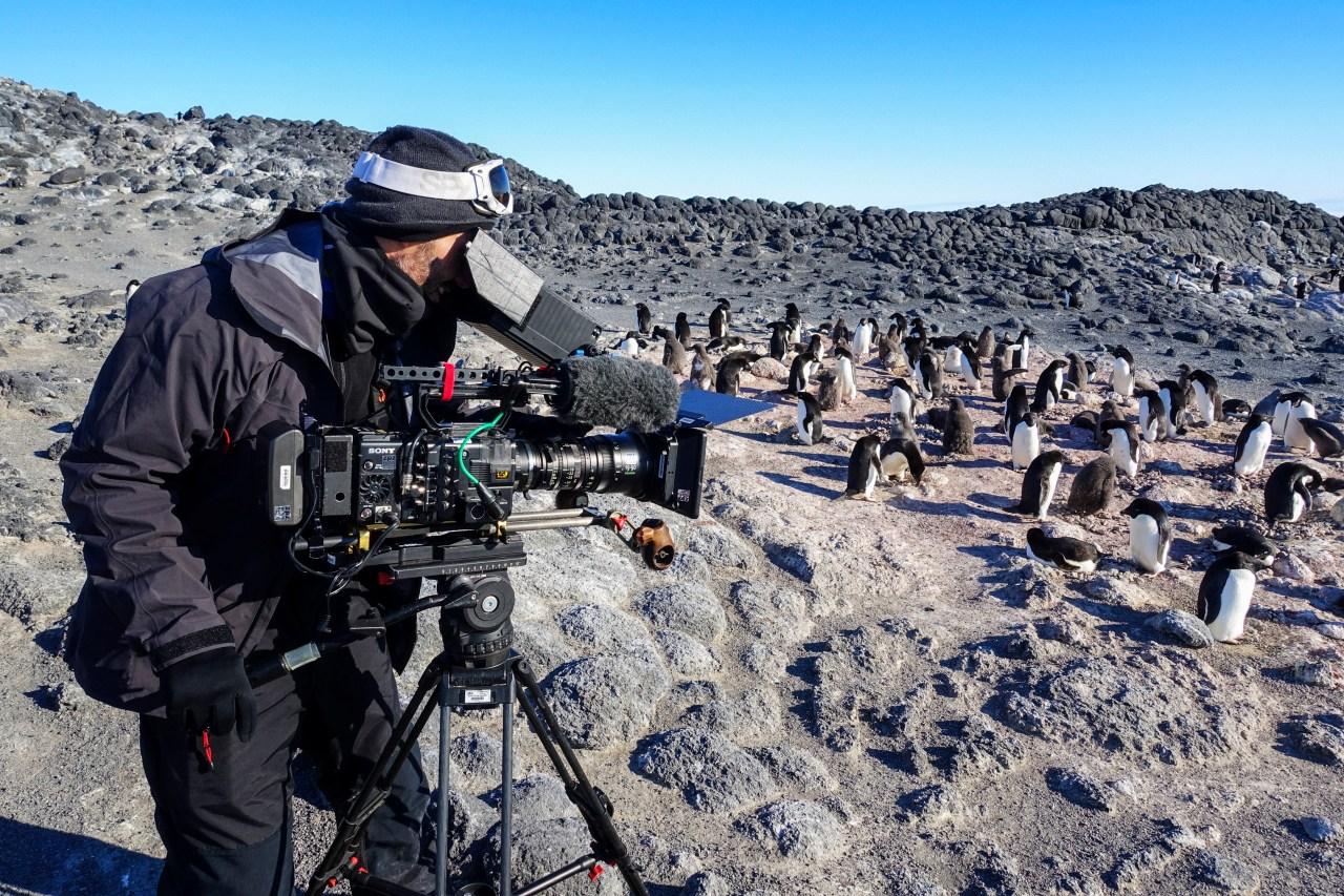 Cameraman Frederic Menou films Adelie penguins at Cape Royds.