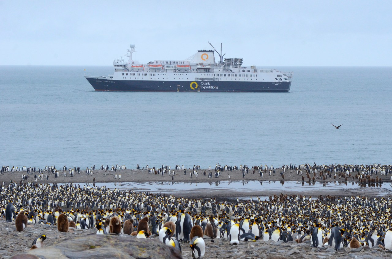 The Ocean Endeavour anchored off the King Penguin colony of St Andrews Bay, South Georgia.