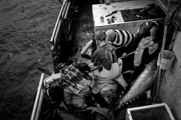 1: The crew pull a swordfish aboard their trawler. 2: Deckhands Kenny and Daryl stand by as a swordfish is winched on board.