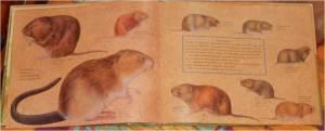 documentaire sur champignons campagnols, rats, mulots