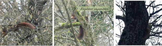 écureuils observation naturaliste sortie nature avec enfants