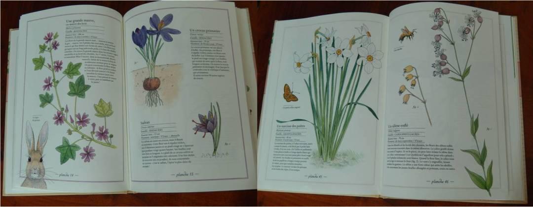 inventaire illustré fleurs virginie aladjidi et emmanuelle tchoukriel
