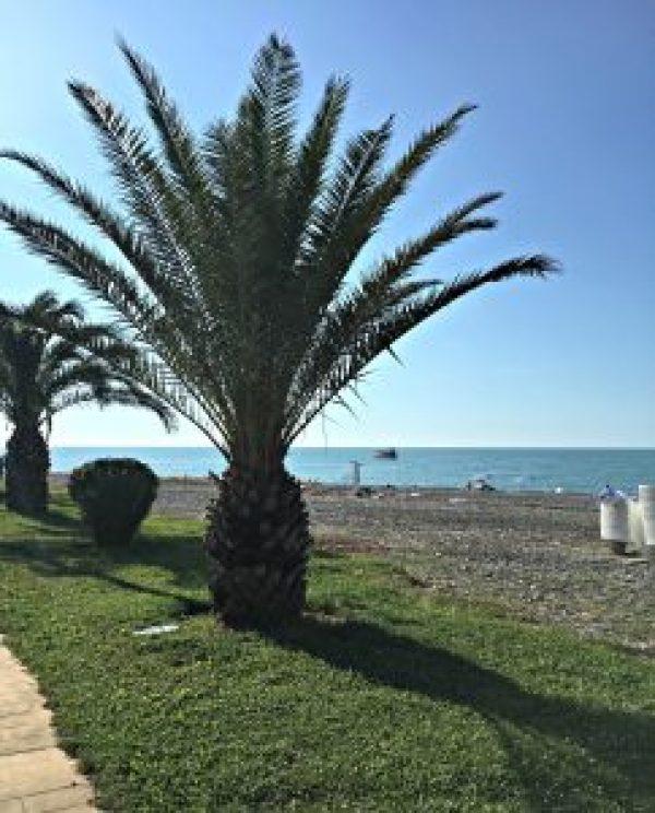 Palm tree along Boulevard