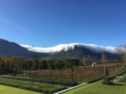 Gardens and vineyards with the backdrop of the Franschhoek mountains