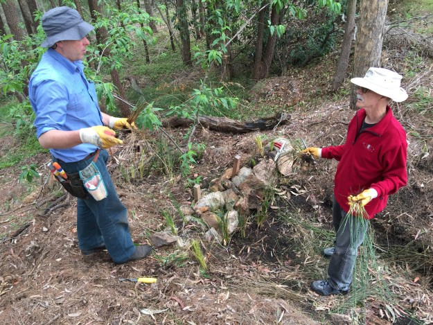 Bushcare Officer Nathan talking with volunteer Howard by sedimentation pond