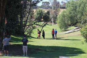 Fairways with disc-eating trees