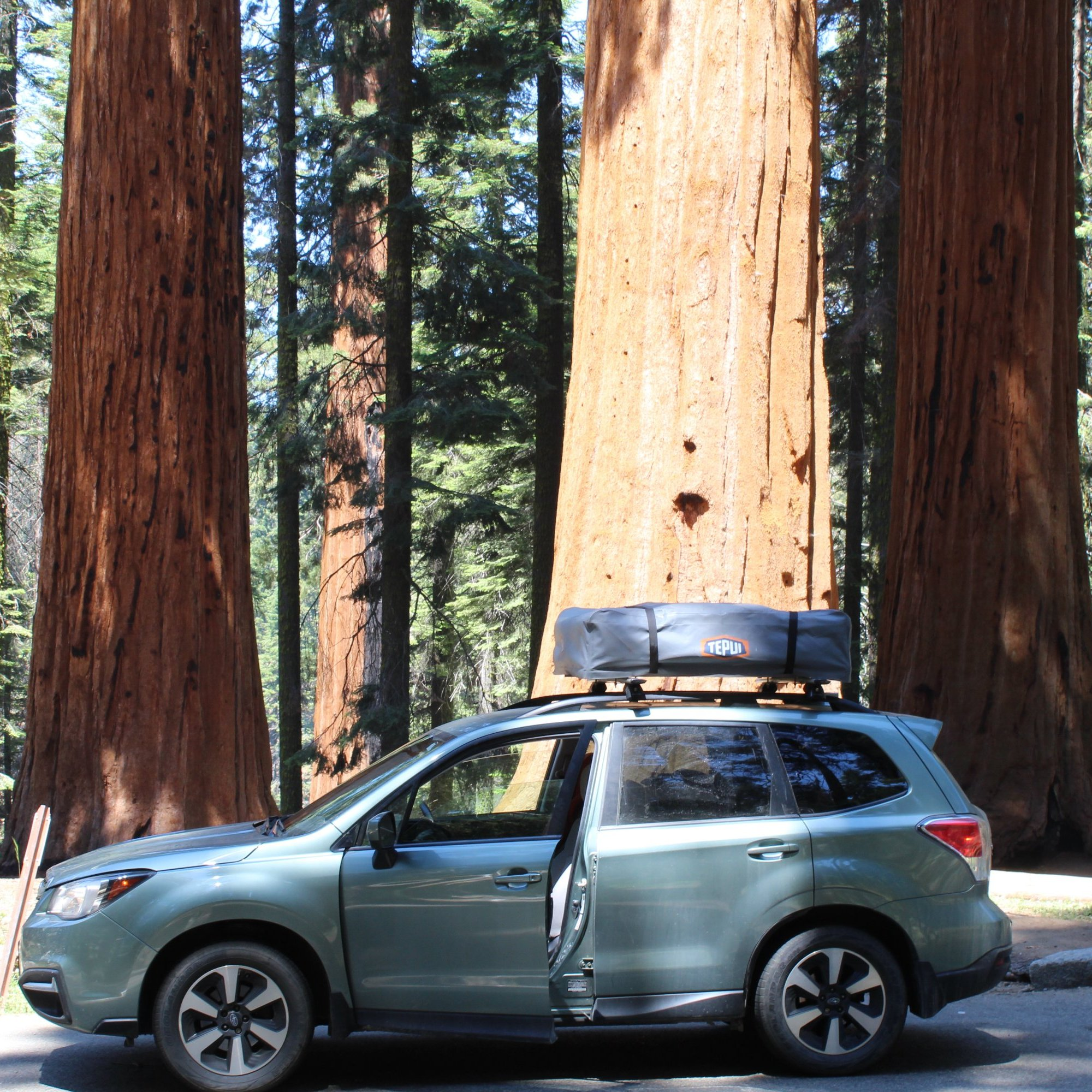 Sequoia National Park - Giant Forest 7-12-19