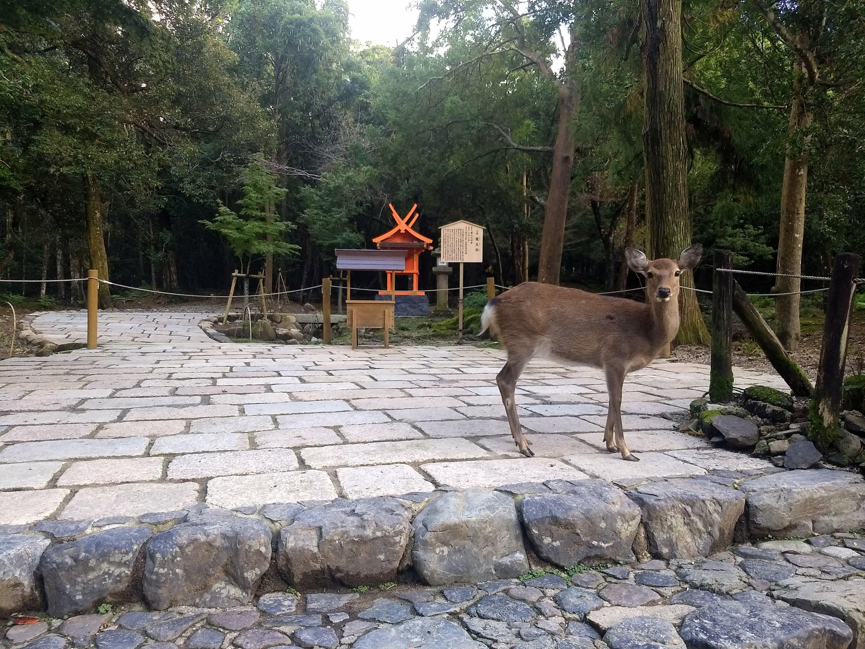 Deer on stone walkway