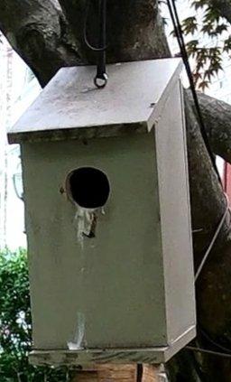 Empty nestbox - 5-27-2020