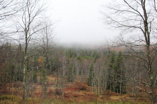 Looking South along Blackbird Knob Trail - 10-11-2020