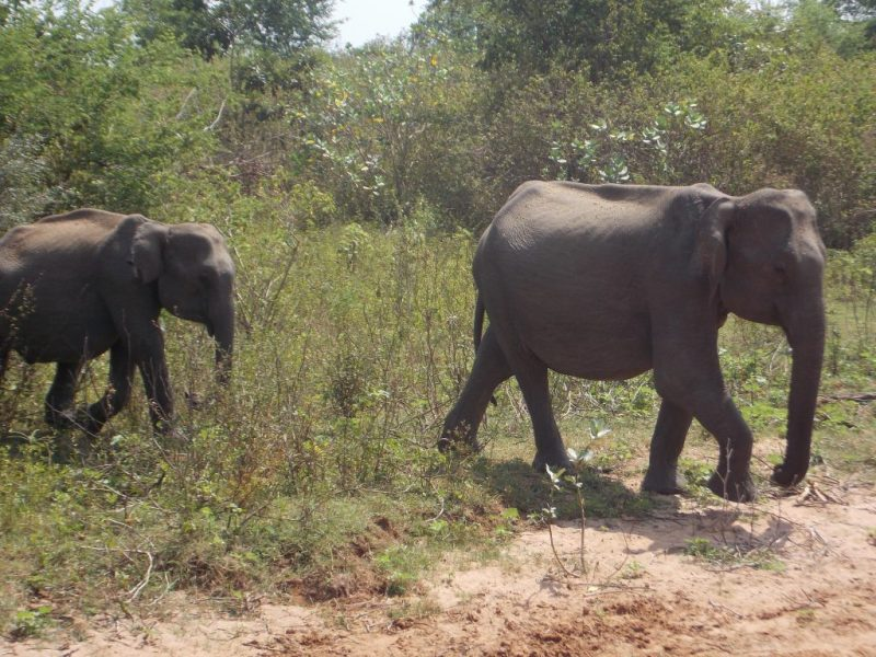 Two little Elephants crossing the road