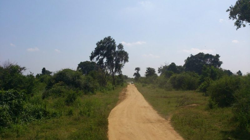 A safari road at Udawalawe National Park