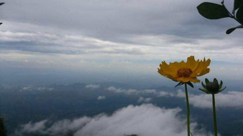 Beautiful Flower above Clouds