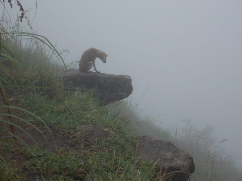 Lonely Dog at the Top of Little Adam's Peak