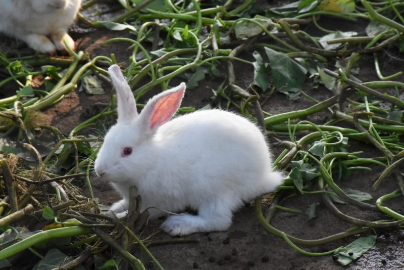 cute rabbit