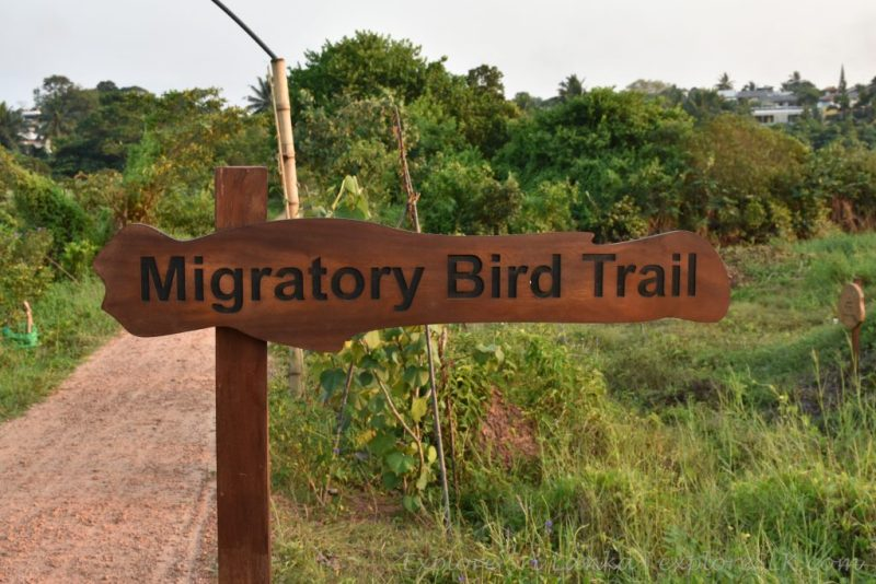Migratory birds trail sign board