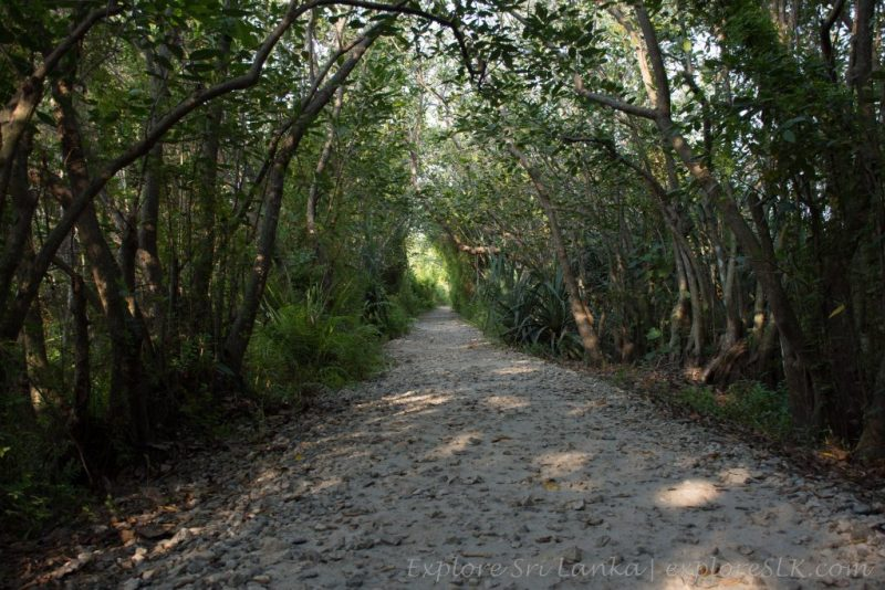 Forest Trail in Beddagana Wetland Park
