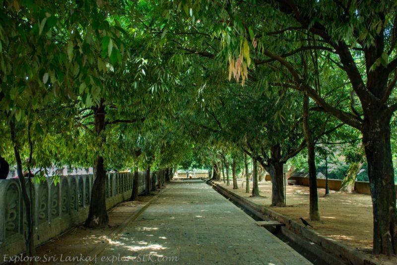 Peaceful Foot Path