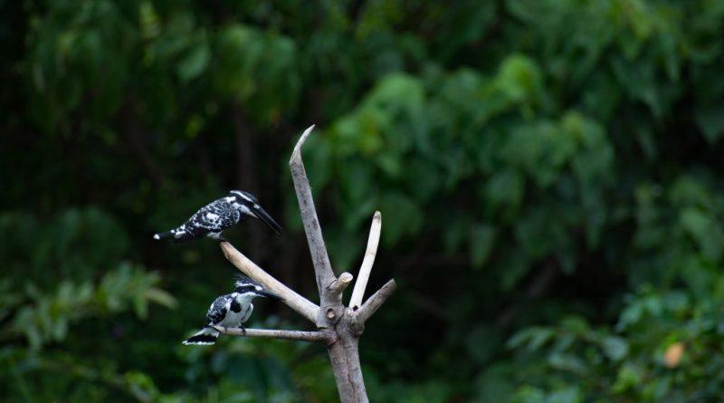 Bird Watching in Diyasaru Park