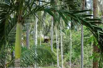 Phillippine Jungle